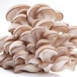 Oyster mushrooms on a white background - Lizenzfreies Foto