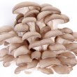 Oyster mushrooms on a white background — Stock Photo #3658205