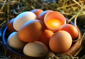 Chicken eggs in the straw with half a broken egg in the morning light. — Zdjęcie stockowe