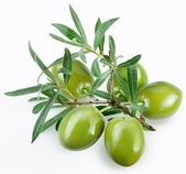 Green olives with a branch on a white background — Stock Photo