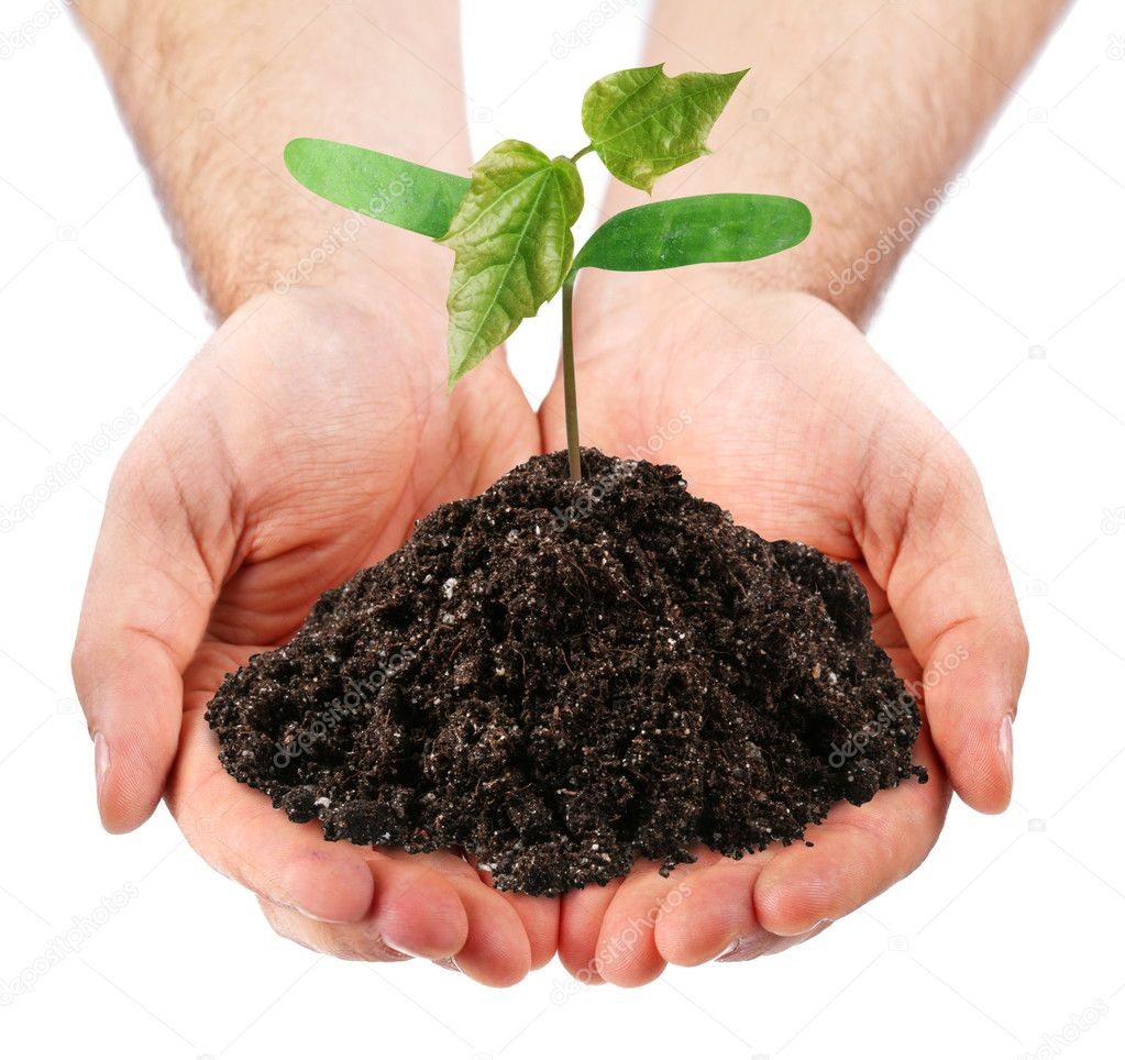 Young sprout in the hands of a man on a white background — Stock Photo #3658069