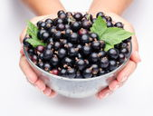 Crockery with black currant. — Stock Photo