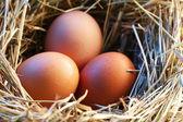 Jaja kurze w słomie w świetle poranka. — Zdjęcie stockowe