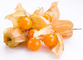 Physalis on a white background — Stock Photo