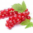 Bunch of red currants on a white background — Stock Photo #3834748