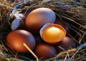 Chicken eggs in the straw with half a broken egg in the morning light. — Stockfoto