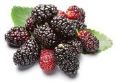 Ripe mulberries. — Stock Photo