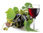 Bottle of wine in the vine on a white background — Stock Photo