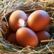 Stock Photo: Chicken eggs in straw in morning light.
