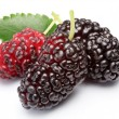 Ripe mulberries. — Stock Photo