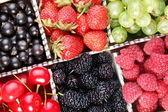 Clourful berries — Stock Photo