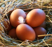 Chicken eggs in the straw in the morning light. — Zdjęcie stockowe