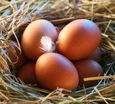 Hönsägg i halmen i morgonljuset. — Stockfoto