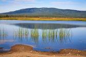 Russian Primorye grass reflection — Stock Photo