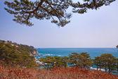 Russia, Primorye, coastal cedar rocky shore autmn — Stock Photo