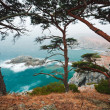 Russia, Primorye, centennial cedar on rocky beach-2 — Stock Photo #3597054
