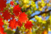 Autumn contrasts — Stock Photo