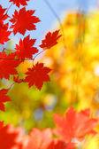 Fall silent — Stock Photo