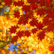 Autumn leaves are beautiful — Stock Photo
