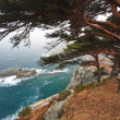 Cedar on a rocky beach — Stock Photo