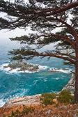 Coastal pine on the rocky shore — Stock Photo