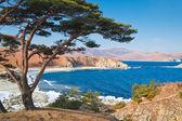 Winter seascape, Japanese cedar — Stock Photo