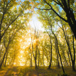 Bright autumn sun in branches of tree — Stockfoto #3815915