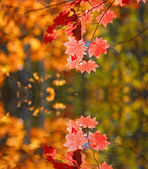 Autumn leaves against a background of water — Stock Photo