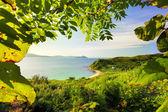 Green landscape — Foto de Stock