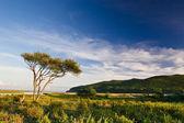 árbol al amanecer — Foto de Stock