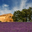 Old barn in Provence — 图库照片