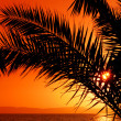 Palm tree during sunset - Stock Photo