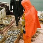 ������, ������: Fishermen on trawler boat
