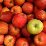 Apples — Stock Photo #3410758