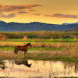 Horse in landscape - Stock Photo