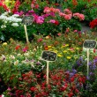 Flower market - Photo