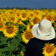 Looking at sunflowers — Stock Photo