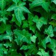 Foliage — Stock Photo #3424220