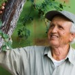 Happy senior looking at tree - Stock Photo