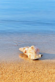 Seashell on serene beach — Stock Photo