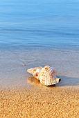 Seashell on serene beach — Stock Photo