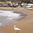 Egret By The Ocean - Lizenzfreies Foto