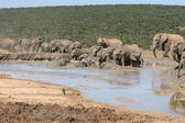 Elephant Bathtime — Stock Photo