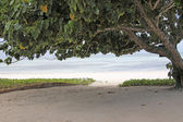 Tree On The Beach — Stock Photo