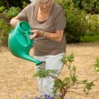 Watering The plants — Stockfoto