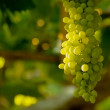 A Bunch Of White Grapes — Stock Photo