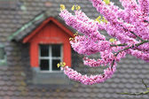 Blossoming tree against an old tile roof — Stok fotoğraf