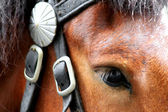 Bay a horse with a white mark in a harness — Stock Photo