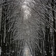 Stock Photo: Avenue in snow
