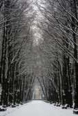Avenue in the snow — Stock Photo